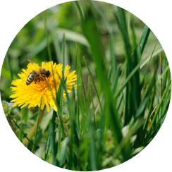 PestNow Lawn Care Service