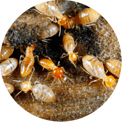 PestNow Pest Control Service